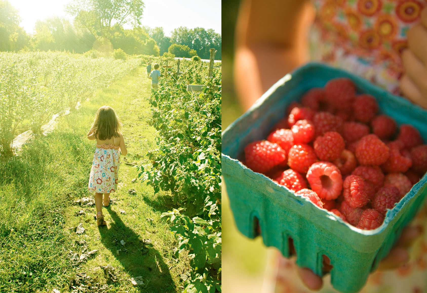 berry-picking-yellow-sunny-girl